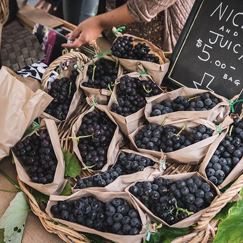 hawkes-bay-farmers-market-budousenhin-grapes