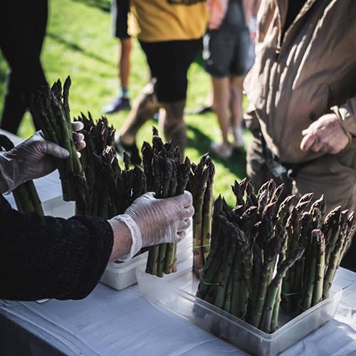 hawkes-bay-farmers-market-farm-fresh-asparagus